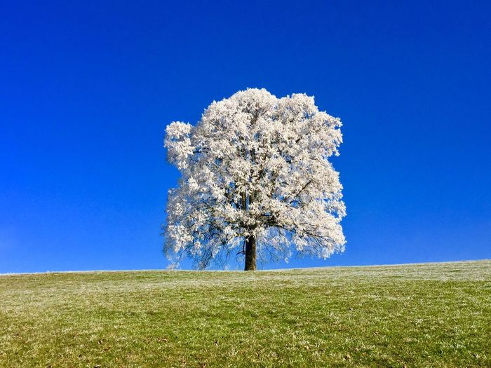 Wintertime Plant Blue Sky Land Field Growth Beauty In Nature Tranquil Scene Day Outdoors Clear Sky Tree Nature