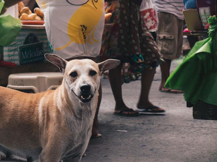 Market's best friend Dog Portrait Looking At Camera Animal Themes Market Outdoors Olympus OLYMPUS PEN E-P3 The Street Photographer - 2017 EyeEm Awards Manila Carriedo Eyeem Philippines Place Of Heart EyeEm Best Shots The Portraitist - 2017 EyeEm Awards Live For The Story The Photojournalist - 2017 EyeEm Awards