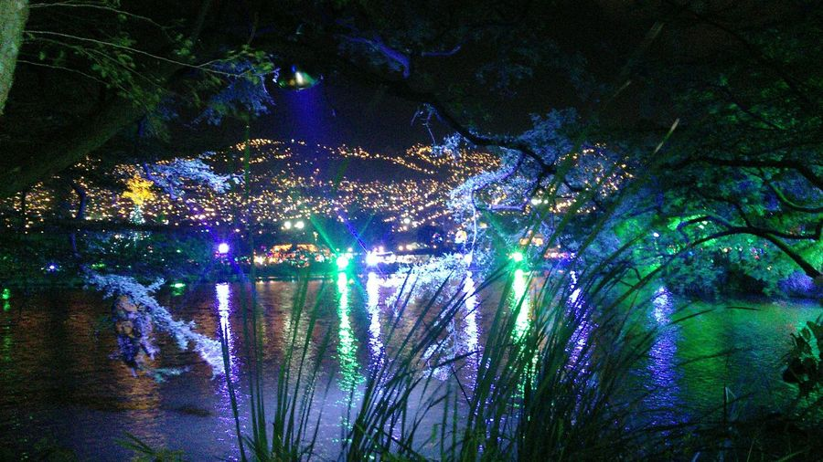 Luces... Illuminated Multi Colored Water Sky Night No People Nature Tree Indoors  Close-up Beauty In Nature Navidad