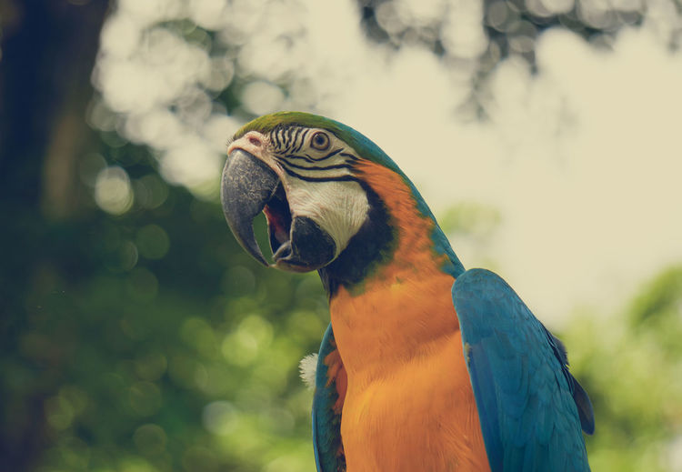 Animal Bird Birdwatching Fowl Wildlife Cacatuoidea Cacatuidae Chirping Birdsong