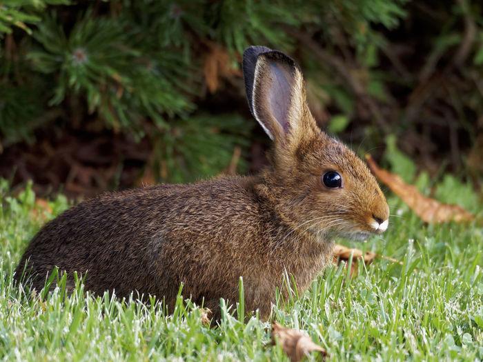 Alert Rabbits