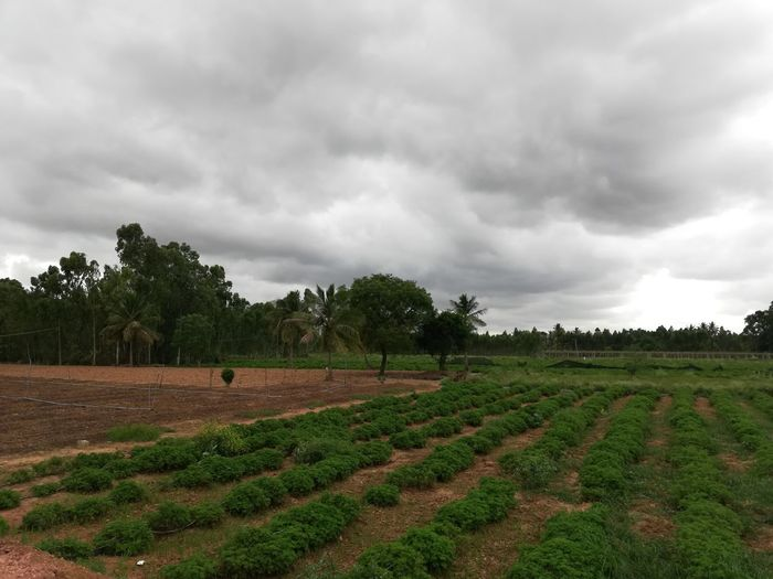 I-Net Photography Tree Rural Scene Agriculture Winemaking Field Business Finance And Industry Crop  Farm In A Row Sky Vineyard Cultivated Plowed Field Plantation Vine - Plant Vintner Red Grape Mustard Plant Winetasting Wine Cellar Patchwork Landscape Grape Wine Cask Winery Cultivated Land Terraced Field Dramatic Sky Vine Agricultural Field Rice Paddy