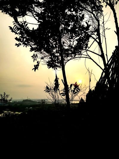 Sunset SORE Bahagia Exploreindonesia Explorebatam Explorekepri Explorekepulauanriau INDONESIA Indonesia_photography Tebinglangitbatam Sekupang Welcometobatam Langitsenja Batam Kepulauanriau Kepri Wisatabatam Sunset Matahariterbenam Senja  Tree Branch Tree Area Silhouette Water Sky Landscape Close-up Dramatic Sky Romantic Sky Moody Sky First Eyeem Photo