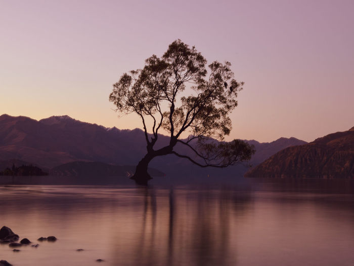 Silhouette tree in lake against clear sky during sunset