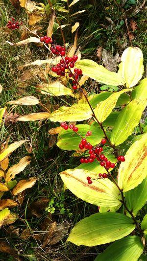 @csefi Autumn Beautiful Nature Nature Plant Beauty In Nature Oldplant