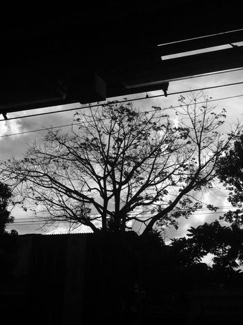 CPTM Tree Low Angle View No People Branch Silhouette Bare Tree Architecture Built Structure