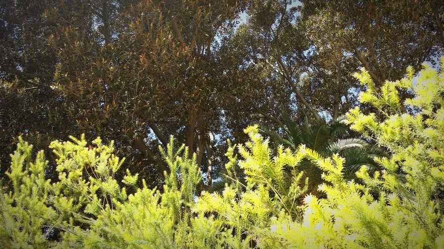 Green Murcia Muchoverde