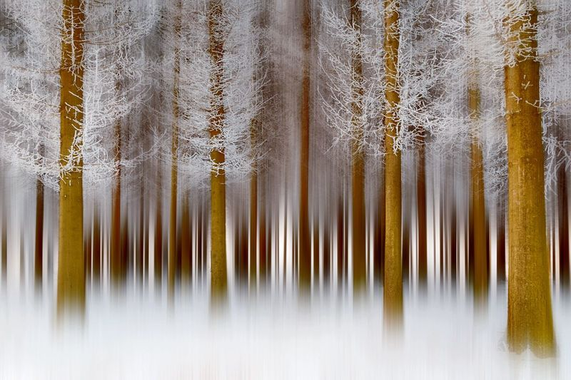 Pine Pine Tree Pine Forest Forest Nature Eyemnaturelover Nature Photography Naturelovers Blurred Blurred Background Blurred Motion Landscape Tree Ozren Mountain Sokobanja Winter Photo Photography Photooftheday Photoshoot