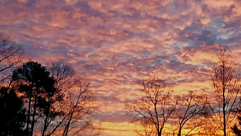 Christmas Morning Sunrise Sunset Tree Nature Dramatic Sky Scenics Beauty In Nature Sky Cloud - Sky Tranquil Scene Outdoors Tranquility No People Landscape Forest Rural Scene Day Silhouette