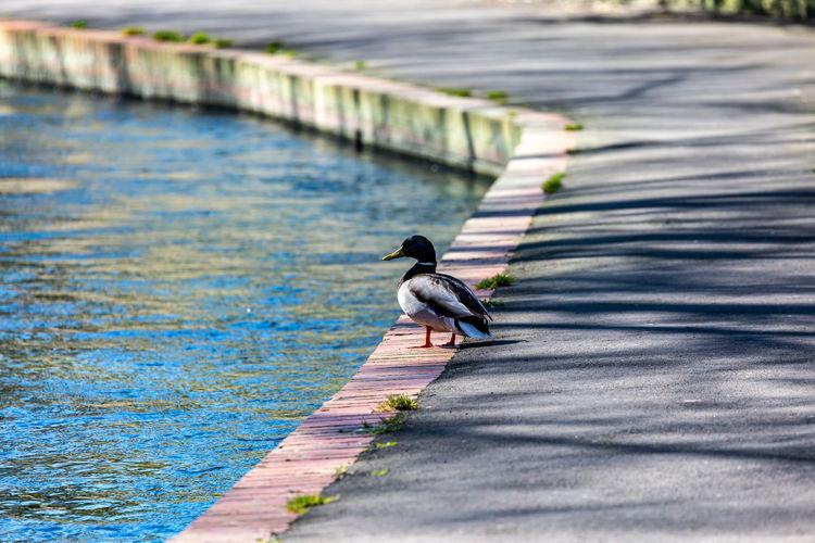 Bird perching on footpath