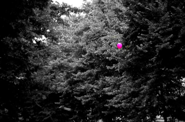 Pink Blackwhitecolour Airballon Balloon Tree Outdoors Close-up Streetphotography_bw Noir Et Blanc Luftballon Ballon Globos De Colores Globo Rosa Minimalism Minimalista Minimaliste Neon Life Focus On The Story