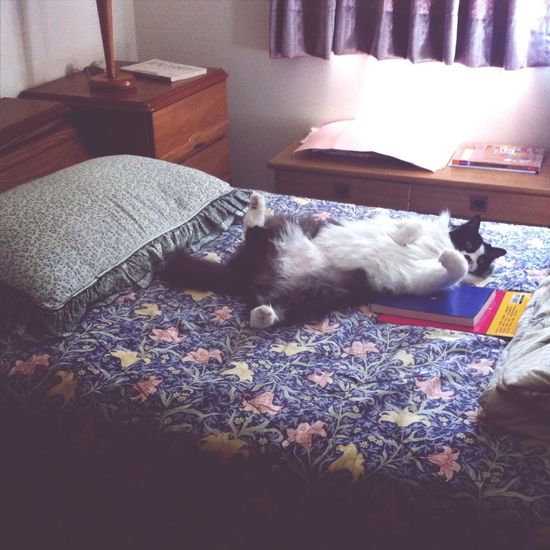 Kitty Hanging Out On The Bed