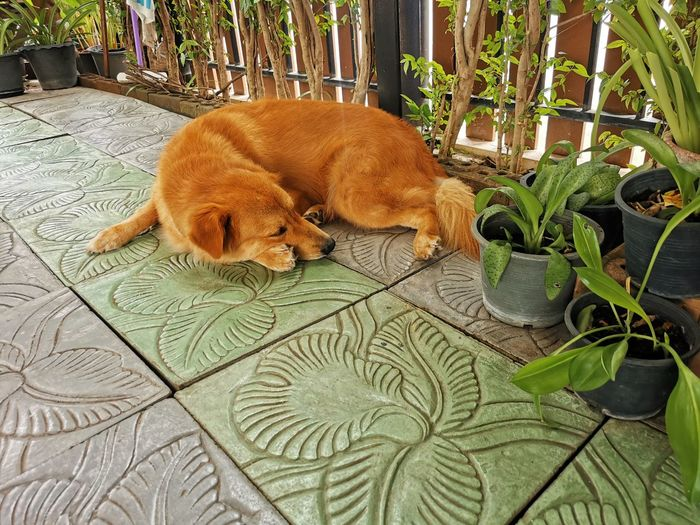 View of a dog sleeping