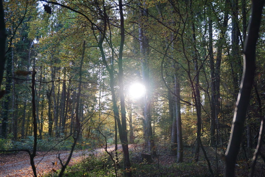 Beauty In Nature WoodLand Sunlight Tree Trunk Landscape Growth Day No People