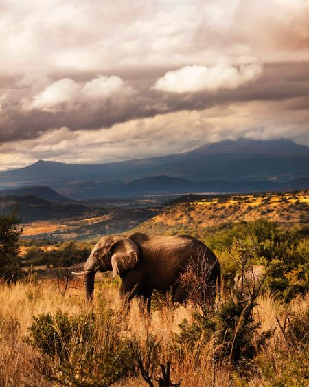 Springbok lodge 📍 Elephant Bush Africa Wildlife Nature Morning Morning Sky South Africa Landscape_photography Eyemphotography Landscape_Collection Clouds And Sky Wilderness Animal