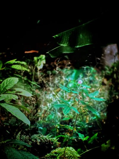 UnderSea Underwater Water Sea Life Close-up Green Color Spider Web Web Insect Butterfly Bug Grasshopper Praying Mantis Dragonfly Caterpillar