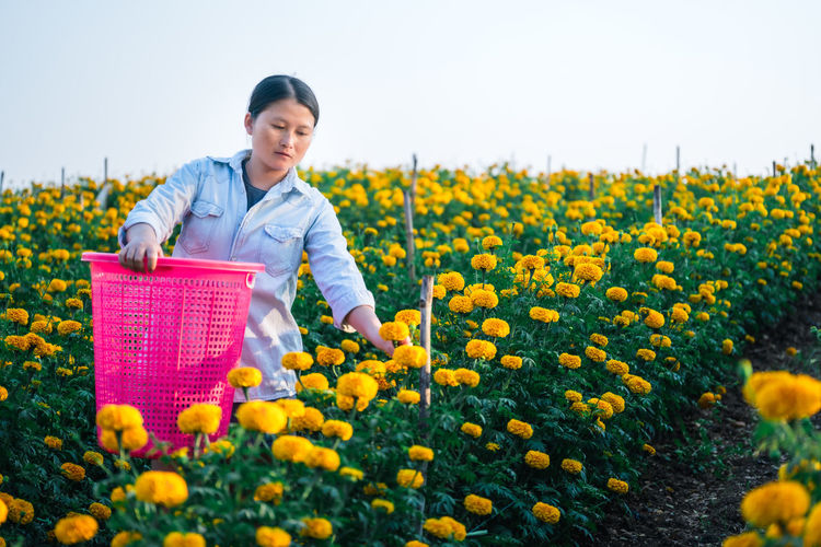 Contemplating woman picking flowers while standing with basket against clear sky