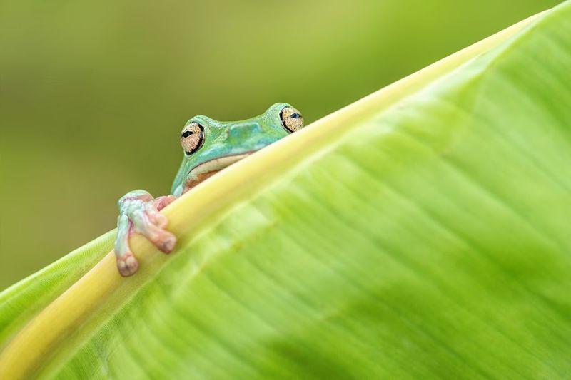 Froggy Hiding