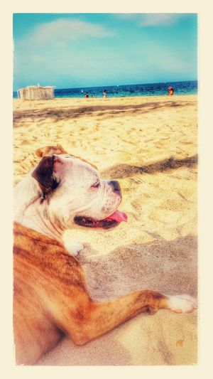 Beach = contentment Relaxing Moments Beachlife Beach Day Perfect Day Manandhisdog