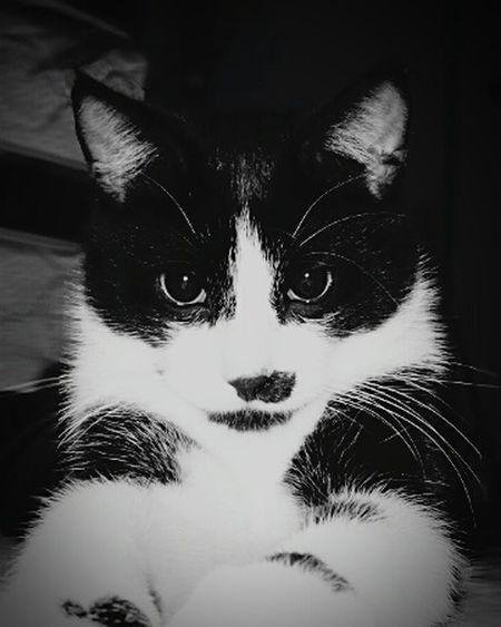 Pets Pets cat called smudge