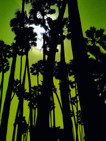 Silhouette No People Growth Tree Nature Close-up Sunset Sky Outdoors Day Huntington Beach Downtown Breaktime! Excersice Walking Around Saturation Park Bench Tired! Godislove Truelove❤unfailinglove Lunchtime! Tree Landscape Dramatic Sky Scenics