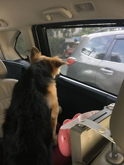 Dog sitting in car