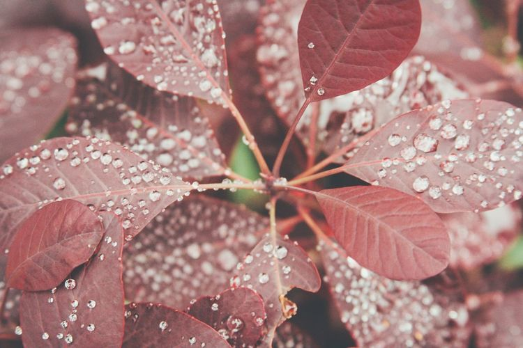 Plants Leaves Raindrops Waterdrops Macro Red Green Nature Nature Photography Nature_perfection Nature_collection Botanical Gardens Plantenunblomen Hamburg Travel Photography EyeEm Nature Lover Canon Nature's Diversities Minimalism Showcase June Fine Art Photography