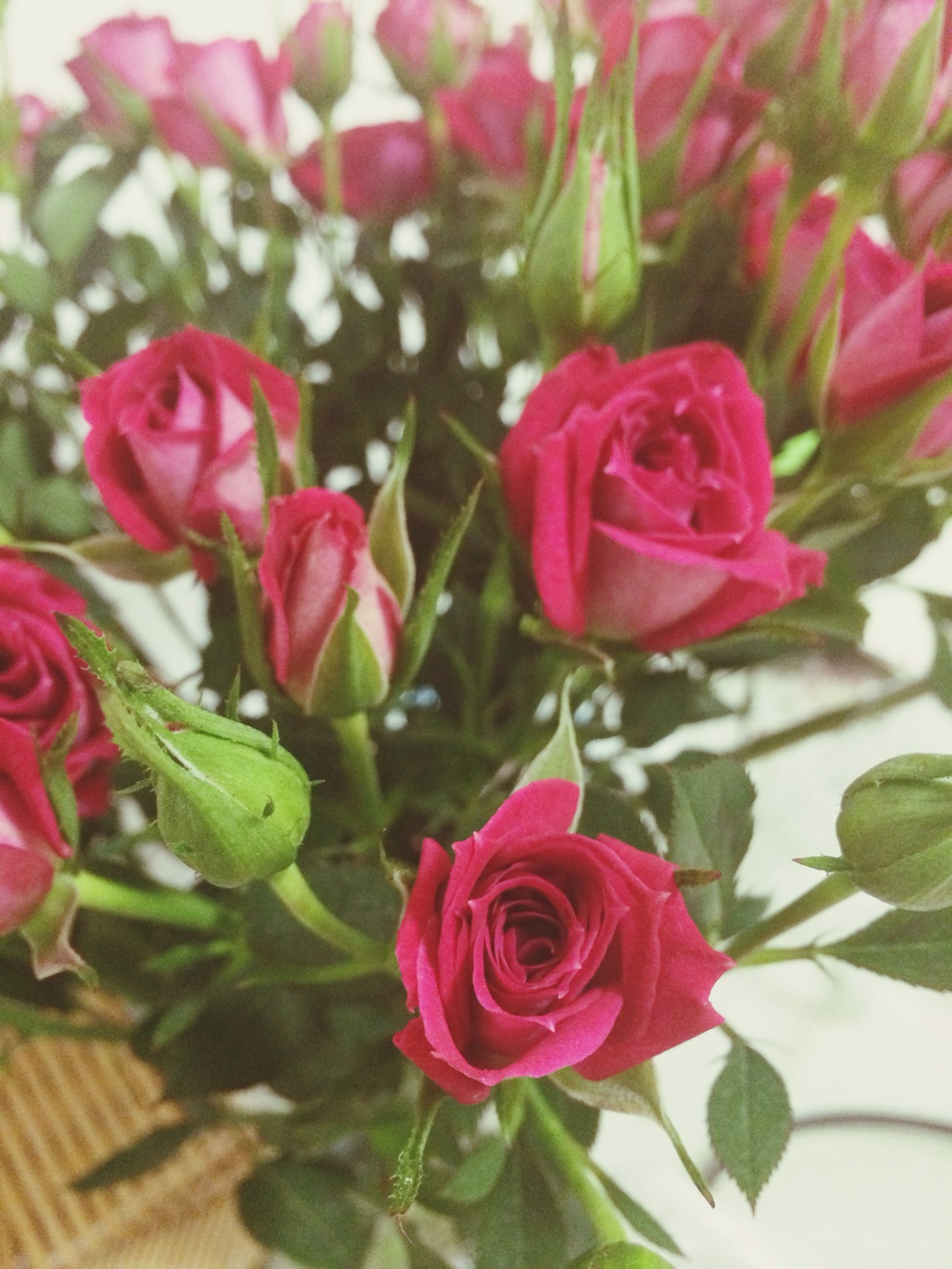 flower, petal, freshness, fragility, pink color, flower head, rose - flower, beauty in nature, growth, close-up, nature, leaf, blooming, plant, focus on foreground, red, rose, pink, indoors, day