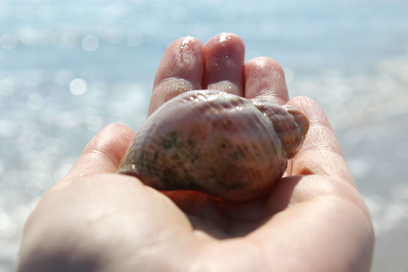 Human Body Part One Person Holding Water Outdoors Day Nature Seashell Art Seashells, Sand And Water Seaside_collection Beauty In Ordinary Things Beaty Of Nature Coastline
