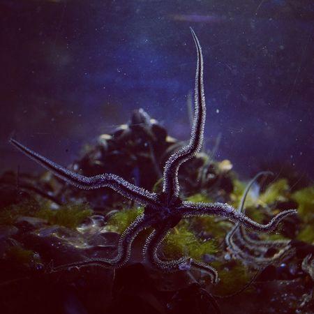 sea star Sea Star étoile De Mer Night Underwater UnderSea No People Water Galaxy Nature Sea Beauty In Nature Close-up Animal Themes Sea Life