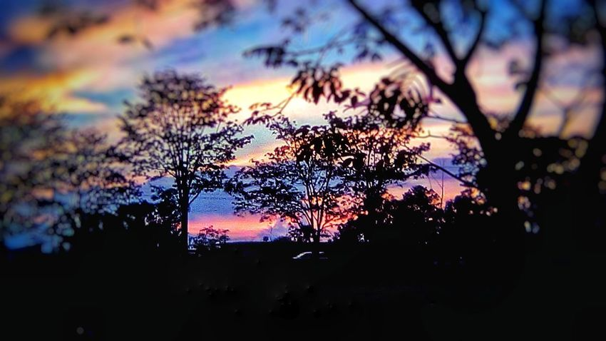 colored summer sunsets! Sunrise_sunsets_aroundworld San Jose, Costa Rica Costa Rica 🇨🇷 Costa Rica❤ Eyemphotography EyeEm Best Shots Tree Multi Colored Sunset Branch Silhouette Water Autumn Tree Area Sky Close-up