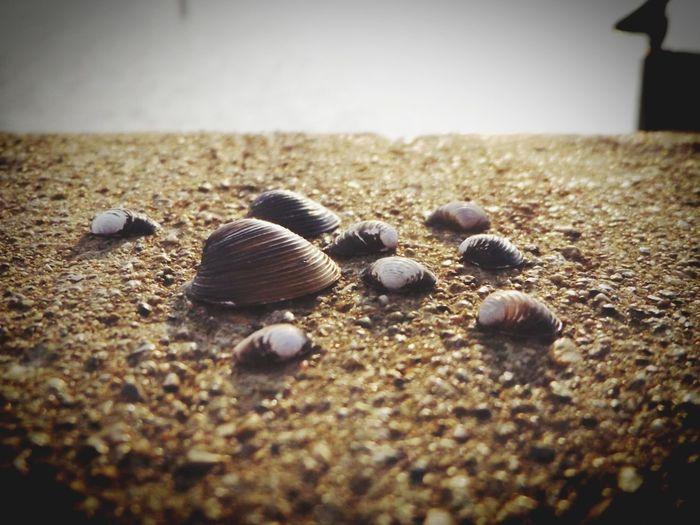 Nature Grass Lake Grass Lake Michigan Seashells, Sand And Water Sea Shells Lake View Lake The Great Outdoors - 2017 EyeEm Awards