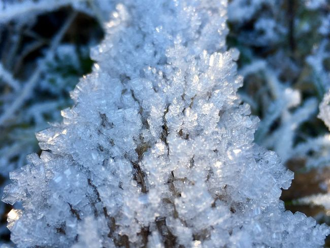 Cold Temperature Winter Snow Nature Close-up Frozen Ice White Color Allgäu Oberstdorf & Umgebung Outside EyeEm Nature Lover Focus On Foreground Weather Beauty In Nature Outdoors No People Growth Ice Crystal Eis Eiskristalle Day Tree Cold Freshness