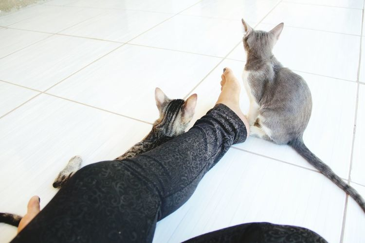 Low section of woman sitting on floor with cats