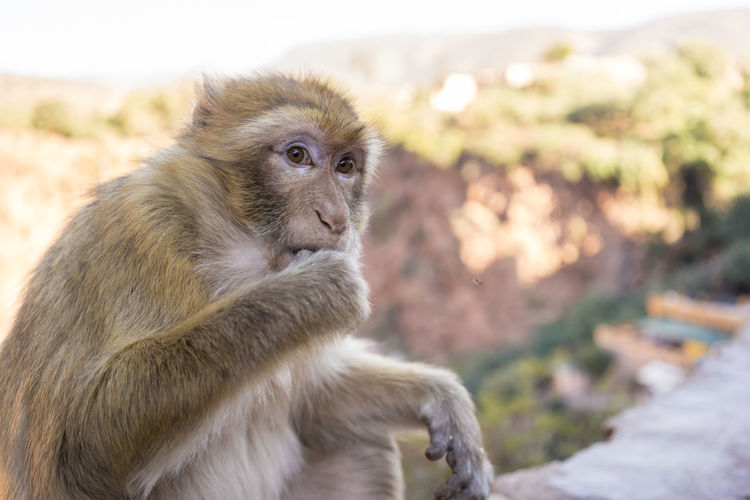 Close-up of monkey sitting looking away