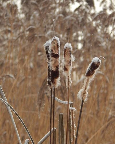 ❄❄❄ Ziema Winter Sniegs Snow Upe River Niedres Daba Nature Latvijasdaba Naturephotography Daugava Riverdaugava Latvija Latvia Fotofantastics_nature_ It's Cold Outside Showcase:January