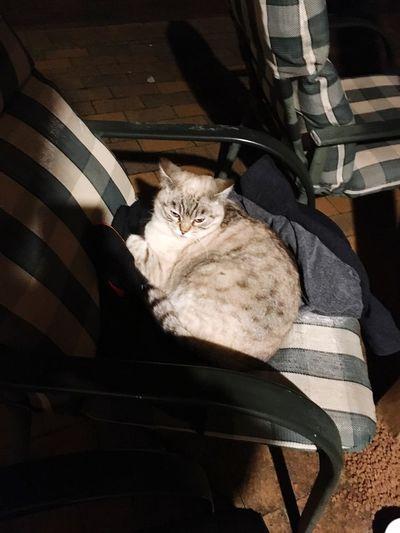 Late night companion Pets Feline Cat