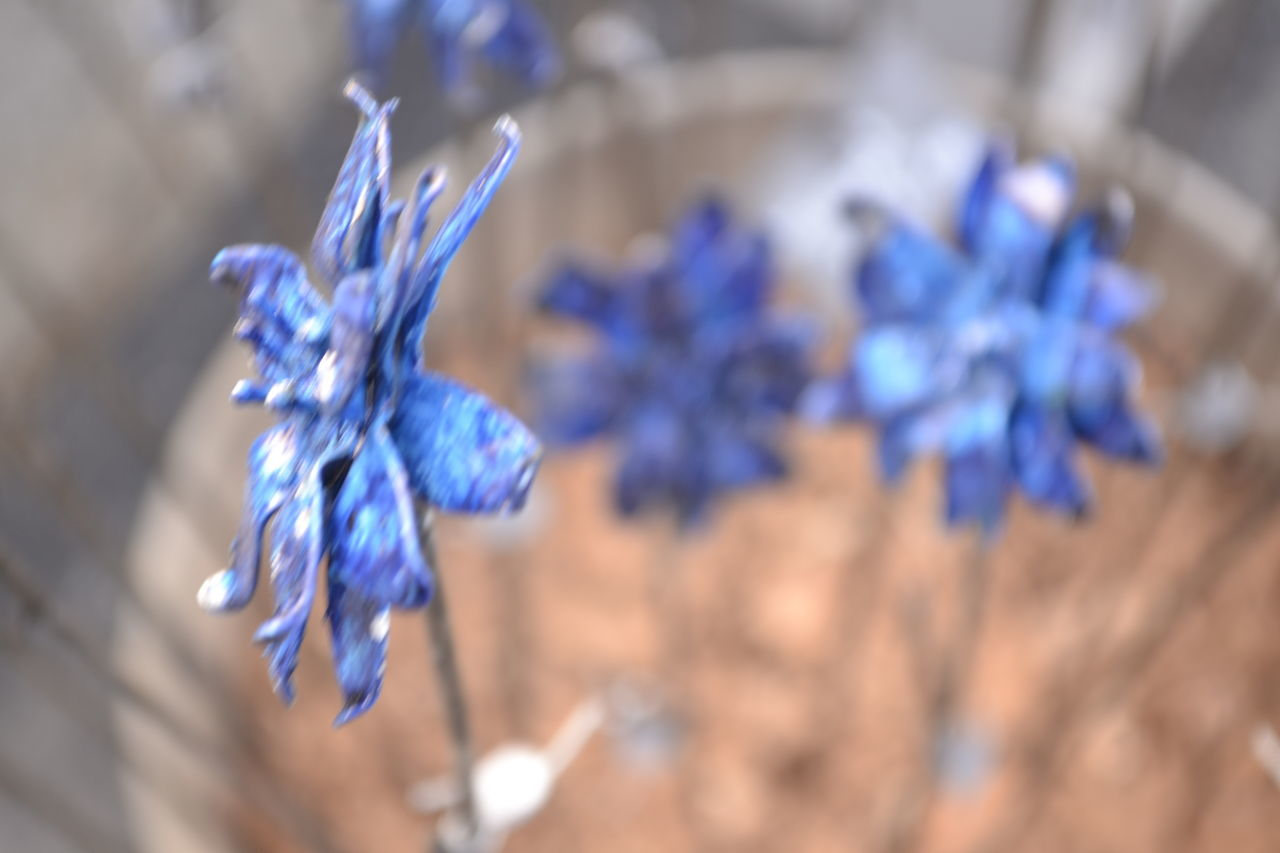 blue, flower, purple, fragility, nature, beauty in nature, petal, no people, close-up, plant, freshness, day, hyacinth, flower head, outdoors