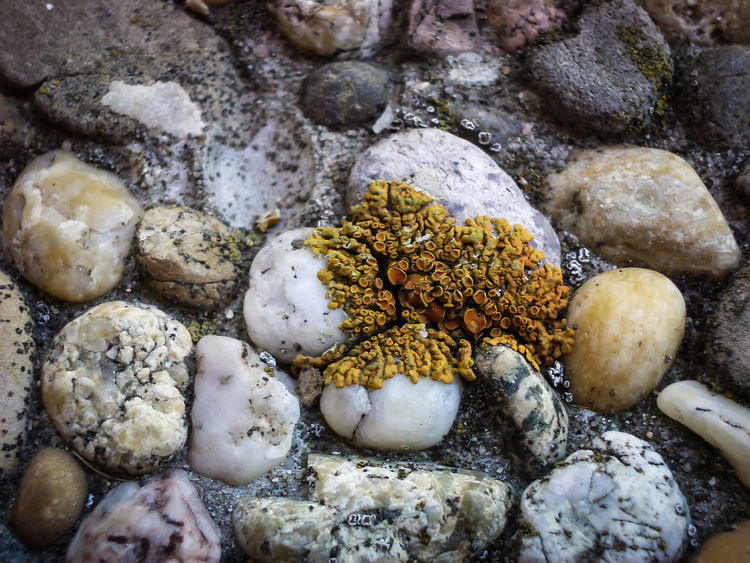 Close-up Day High Angle View Lychen Makro Nature No People Outdoors Pebbles