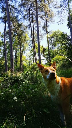 Check This Out Things I Like Dogslife Things That Are Green Nature_collection Dog Photo Dog Photography Showcase April The Great Outdoors With Adobe The Great Outdoors - 2016 EyeEm Awards The Great Outdoors - 2017 EyeEm Awards Pet Portraits