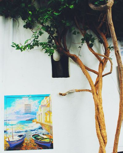 Art grows on trees Tree Places Green Art Street Art Photography Indoors  No People Hanging Home Showcase Interior Day First Eyeem Photo
