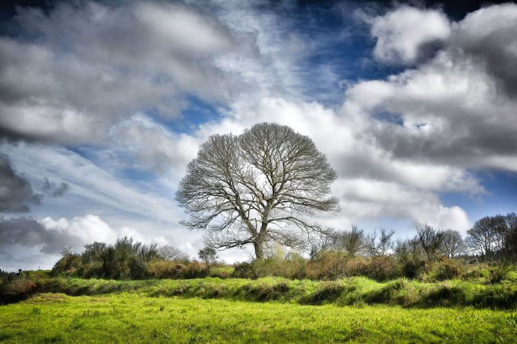 Lonely tree with cloudy sky Background Bare Tree Blue Bough Cloudy Colorful Vivid Countryside Daylight Detailed Graphic Green Landmark Landscape Lonely Tree Naked Nature Nobody Non-urban Outdoor Rural Scenic Sky TreePorn Wallpaper