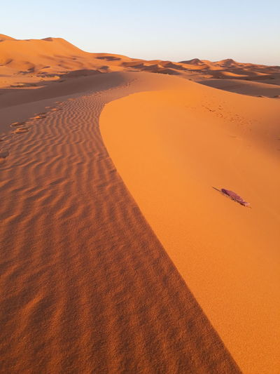 desert EyeEm Selects Sand Dune Desert Arid Climate Adventure Horizon Sand Sunset Full Length Summer Grazing