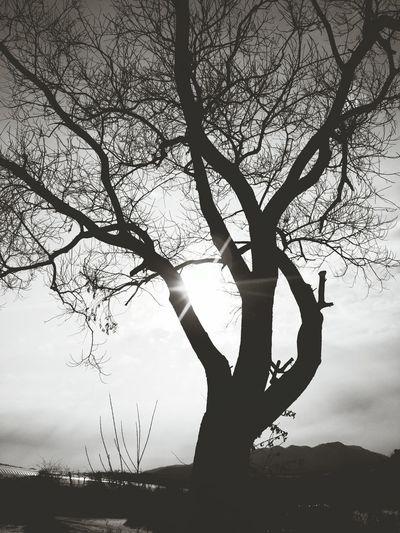 Hugging A Tree Sky Nature_collection EyeEm Best Shots - Black + White EyeEm Best Edits Blackandwhitephotography Blackandwhite Photography Blackandwhite Black&white Silhouette