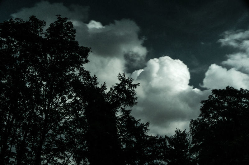 Tree Low Angle View Sky Nature Cloud - Sky No People Outdoors Silhouette Beauty In Nature Day Storm Cloud