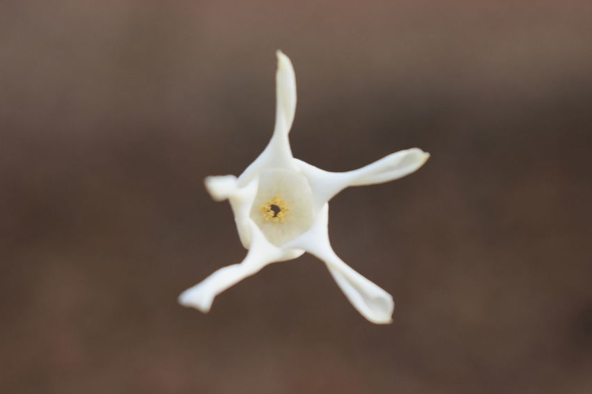 white sweet smelling flower swinging on spider web Autumn Flying Flower In The Air Sweet Smell Swinging Amazing Bold Flying Tropical Climate Tropical Sweet Smelling Flowers Got Struck On Spider Web White