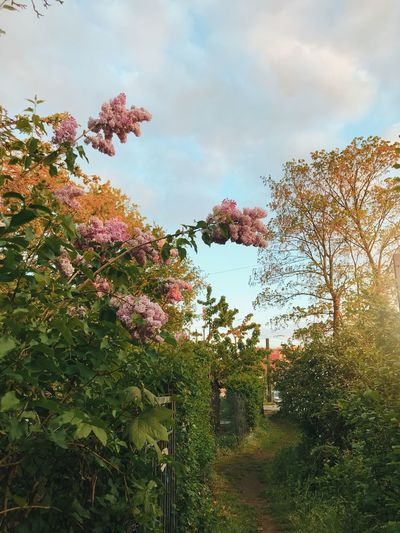 Scenic view of pink flowering trees and plants against sky