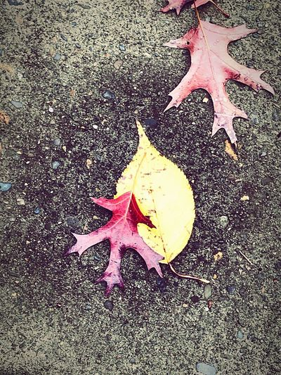 High angle view of maple leaf fallen on floor