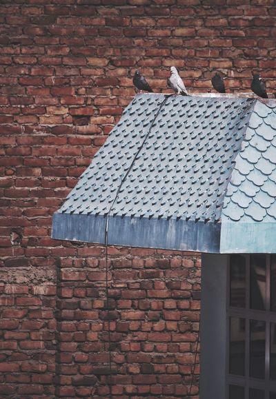 Minimalist Architecture Brick Wall Built Structure Building Exterior Architecture No People Outdoors Roof Day Eye4photography  EyeEm Best Shots Street Photography India Natural Light Textured  Pigeons Break The Mold