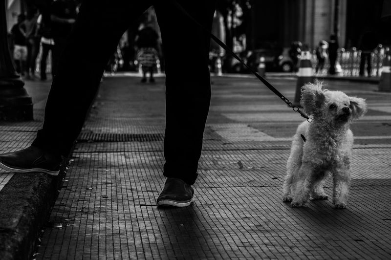 Low section of man with dog walking on sidewalk